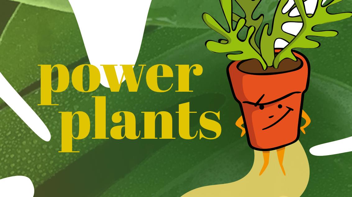 Florcare - botiga online - Ideamatic